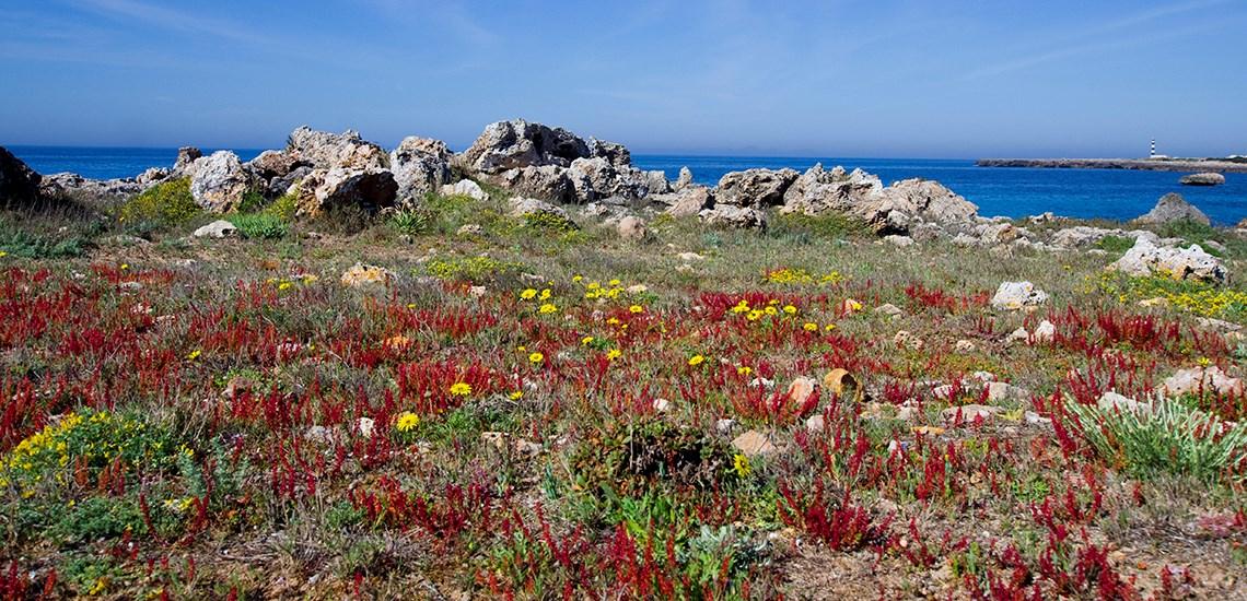 7 planes para viajar a Menorca con niños en primavera