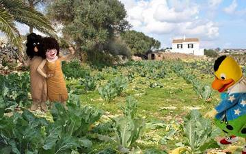 Kiko plants tomatoes in an orchard in Menorca